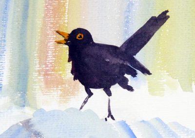 blackbird_w