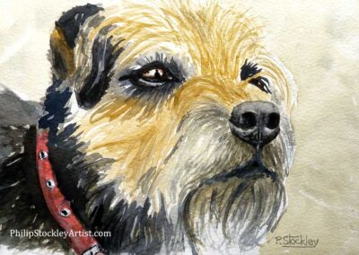 Ted, the border terrier dog